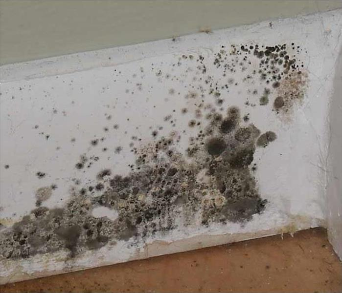 Protect your home from mold!
