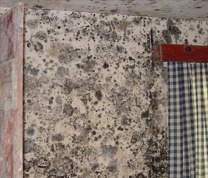 Mold Remediation Cleaning Mold in Wayland, Mass.